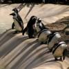 Londono zoologijos sodas – atrakcija visai šeimai
