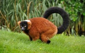Geriausi pasaulyje zoologijos sodai