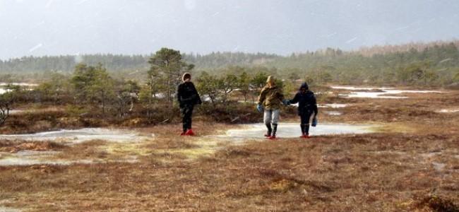 Lankytinos vietos Estijoje: kalėjimas po vandeniu, šikšnosparnių urvai ir šimtai salų