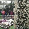 Diena Londone. Karališkieji Kew botanikos sodai