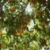 Kada atostogauti Sicilijoje? Klimatas ir oro sąlygos Sicilijoje