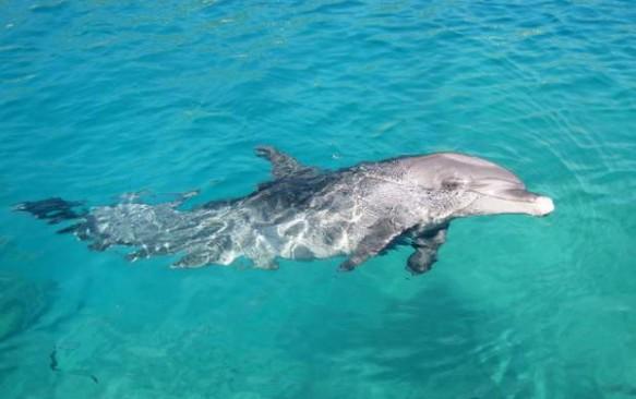 Izraelis. Delfinų rifas Eilate – poilsis delfinų draugijoje