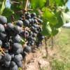 Kelionė po žymius Portugalijos vyno regionus