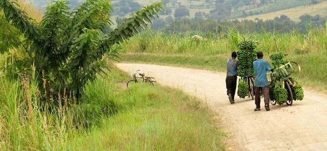 Egzotinės kelionės ieškantiems nuotykių: Š. Korėja, Uganda, Papua Naujoji Gvinėja