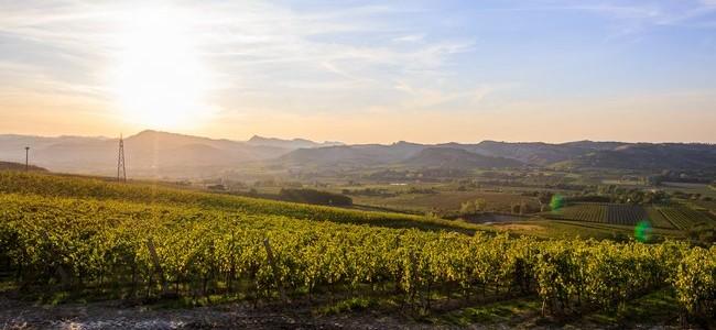 Kur gimsta putojantis vynas? Vynuogių regionai Europoje