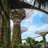 Singapūras: ką pamatyti, paragauti bei keletas patarimų