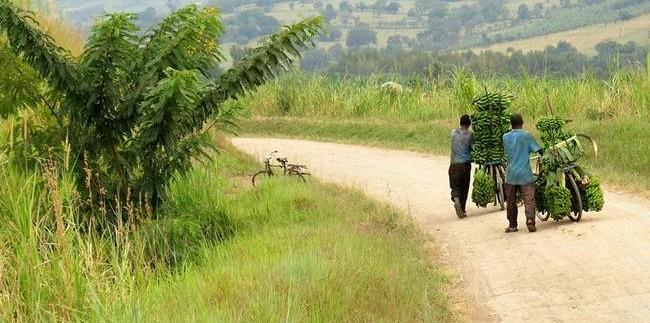 keliones-i-uganda